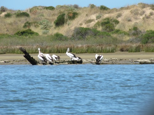 Coorong National Park, near Goolwa