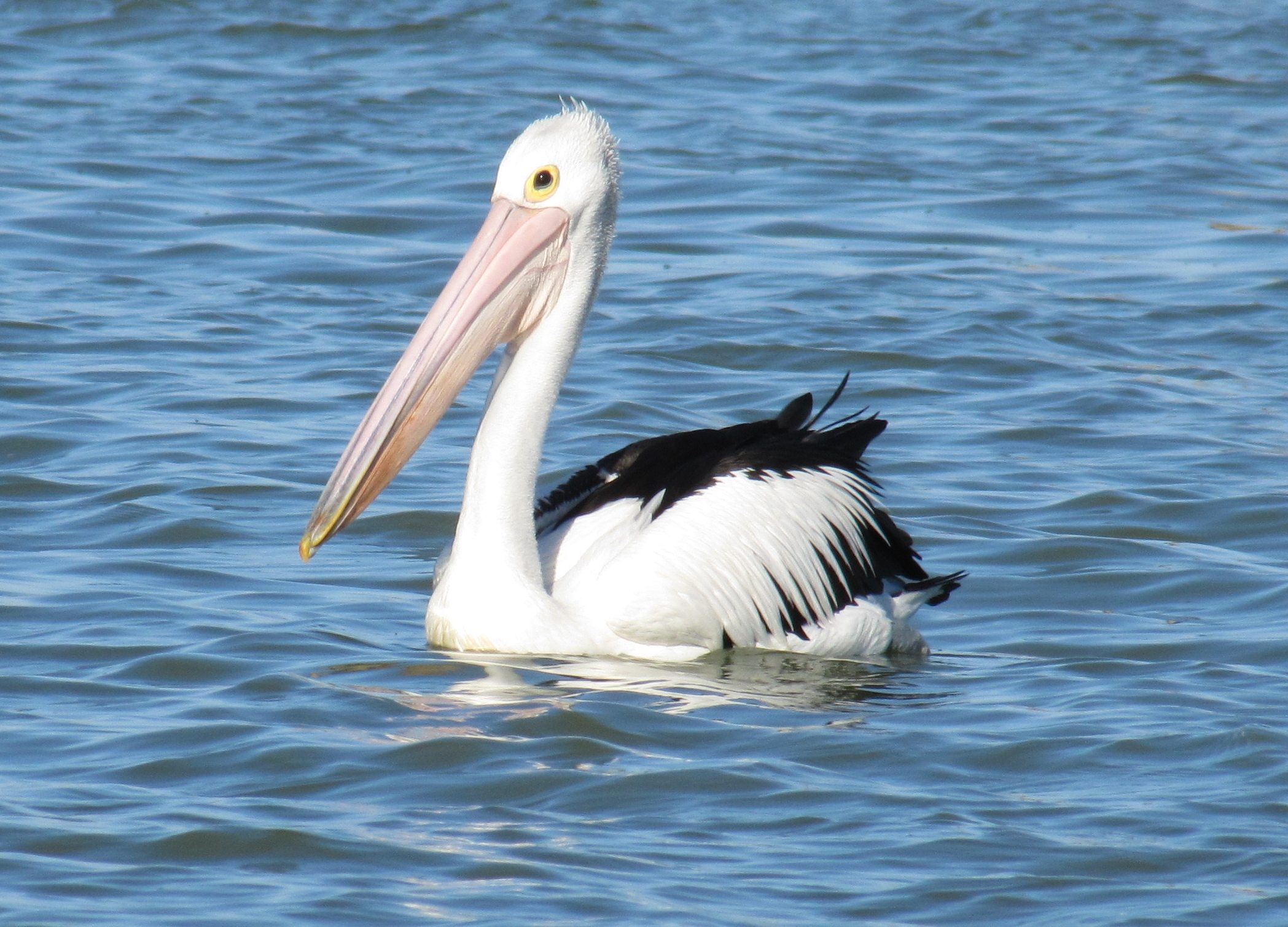 how to help the coorong