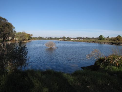 Part of the lagoon south of Sturt Reserve, Murray Bridge