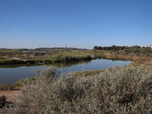 Rocky Gully wetlands, Murray Bridge, South Australia